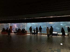 【姫路】結婚相談所 ロビンソン・パートナーズ【神戸】スマ水族園_大水槽