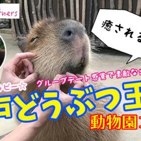 【姫路】結婚相談所 ロビンソン・パートナーズ【神戸】動物園コン